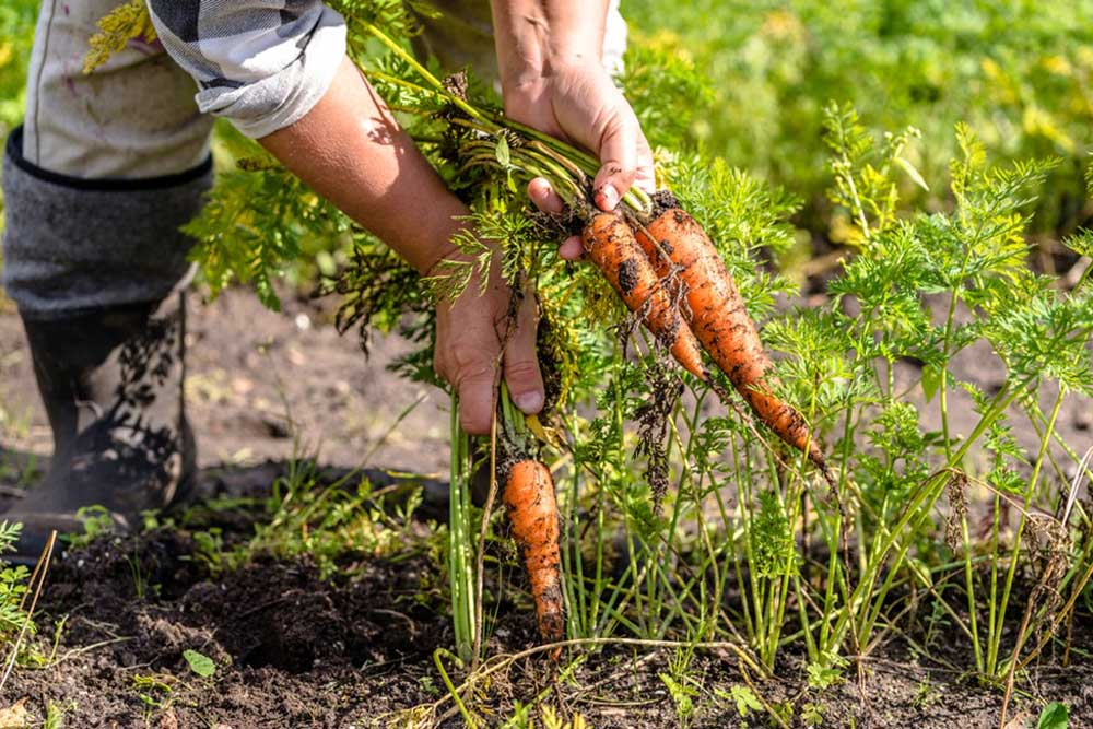 planted-vegetable-seeds